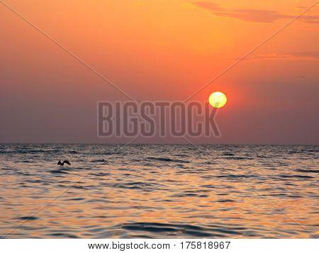 Fantastic orange sea ocean sunset horizon sky photo