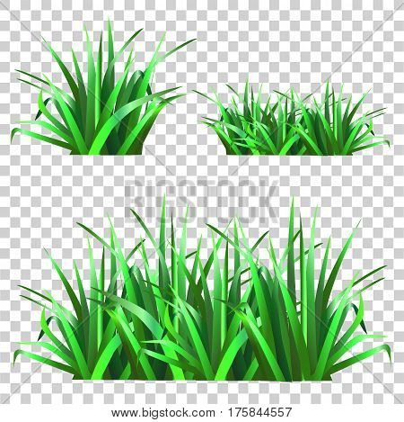 Set of green grass. Nature.Spring grass. Vector  illustration