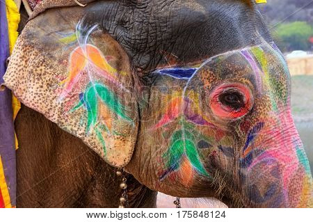 Portrait Of Painted Elephant Walking Up To Amber Fort Near Jaipur, Rajasthan, India