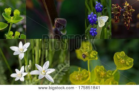 Fresh spring motives in several close-up pictures with shallow depth: walnut bud, butterfly, white flowers, fancy green plant, maple burgeon enlighted by sun