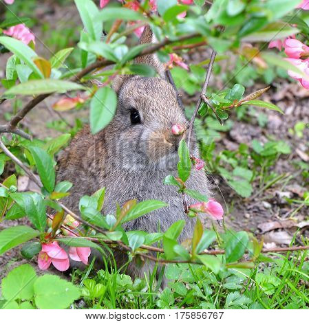 very young rabbit in nature in hidding place
