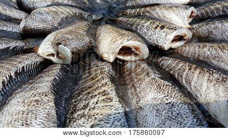 Gourami fish preserves and background fish .