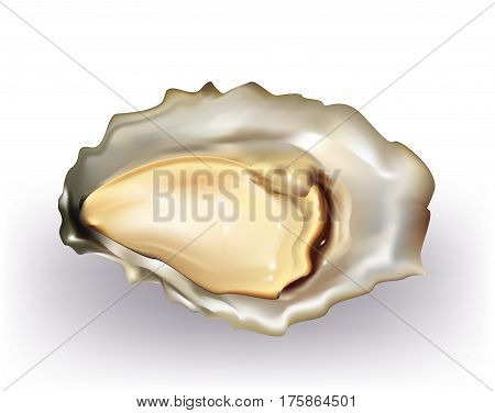 Delicious oyster in the shell on white background