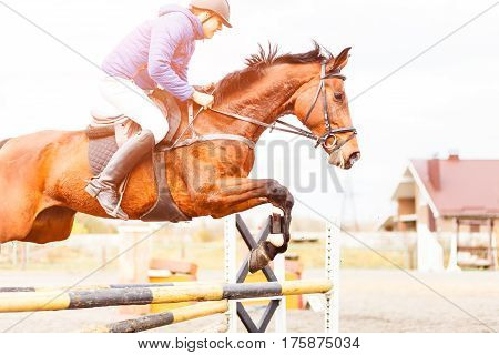 Young sportsman on bay horse jumping over obstacle on training