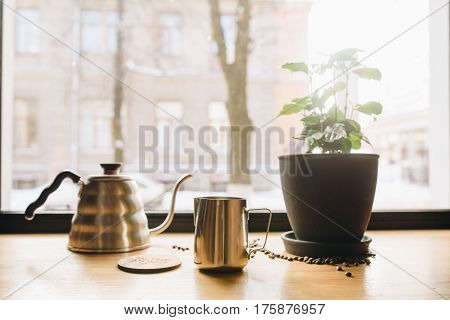 The window and windowsill with pitcher coffee green flower in daylight mear window