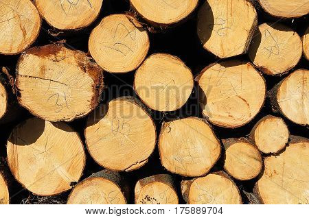 Pile of numbered wooden logs. Butt-end view.