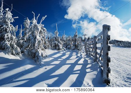 Image of great winter day with snow-covered fir trees and rimy wooden fence