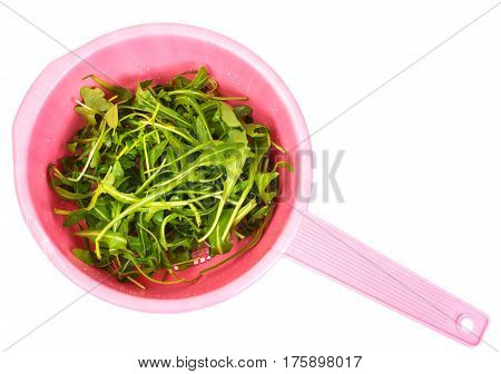 Wet arugula in pink colander. Studio Photo