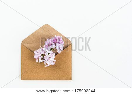 close up of opened craft paper envelope filled with spring blossom soft pale purple lilac flowers laying on white background. top view. concept of love and proposal. Flat lay. happy valentines day. womens day. 8 of march. mothers day.