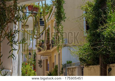 Rethymno, Greece - August  2, 2016:  Big Cactuses On The Balcony In The Old Town.