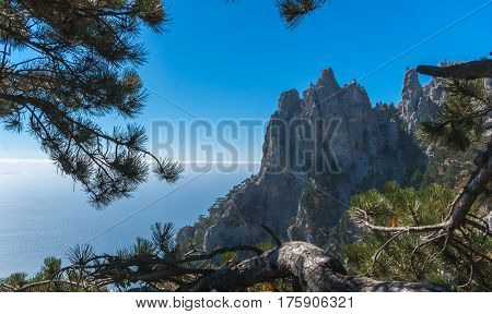 View on the cliffs in the background lines of clouds and sea through branches of spruce. The composition with green branches of mountain pine in the foreground, mountains, clouds and sea on the back.