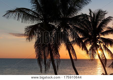 Sun setting behind palm trees silhouettes in Florida Keys