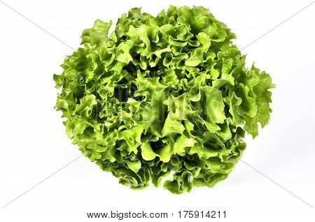 Fresh green lettuce salad leaves closeup. Vegetable salad lettuce