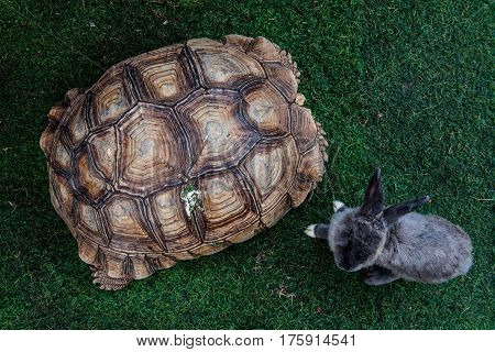 turtle and rabbit reptiles animal in the garden