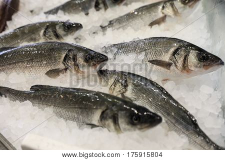 Fresh European seabass or Dicentrarchus labrax, lavpaki on ice in the greek fish shop for sale. Horizontal. Close.