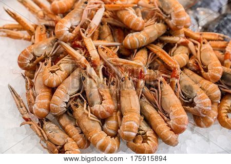 Freshly caught scampi or Norway lobster, Nephrops norvegicus on the counter with ice at the greek fish market for sale. Horizontal. Close up. Selective focus.