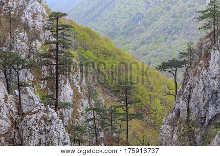 Tasnei Gorge protected area in Baile Herculane Romania