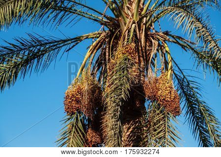 view into the sky through a date palm close-up shot .