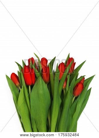Large Bouquet Of Fresh Burgundy-red Tulips, Isolated On White Background