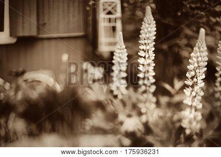 Nostalgic Photo Of The Country House Garden