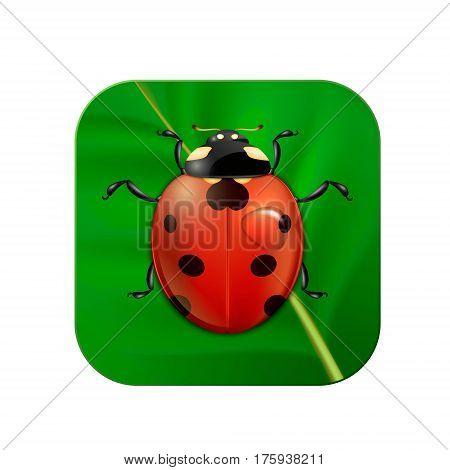 Vector close-up realistic icon with ladybug on leaf. EPS10 illustration.