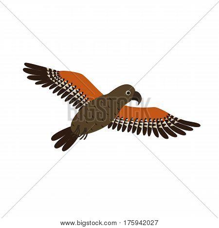 Kea Mountain Parrot nestor notabilis fly in motion in Fiordland, New Zealand.