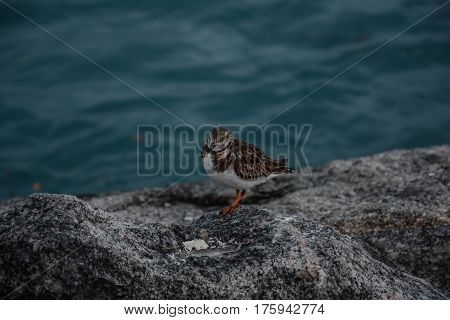 AN ISOLATED SANDPIPER ON A ROCK AT THE EDGE OF THE WATER