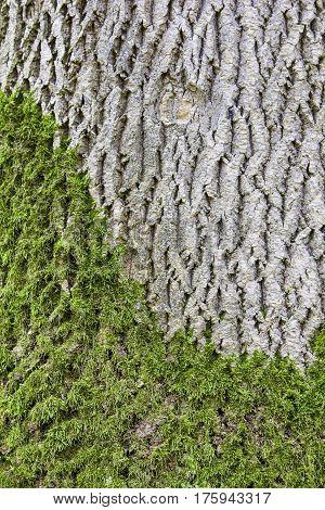 green Moss on the tree like yin yang