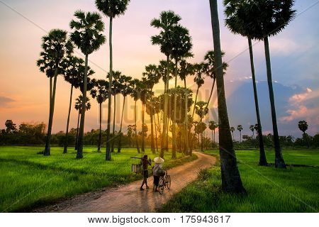 The elderly couple on their way home with high sugar palm trees near sunset in Thailand Way of life