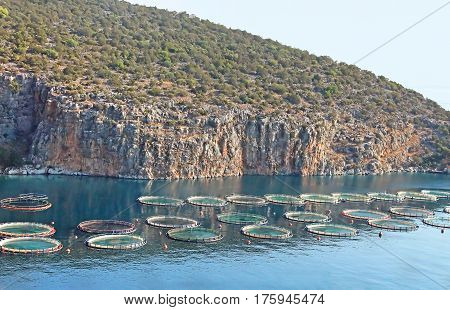 Aquaculture in Greece. Fish farming or pisciculture involves raising fish commercially in tanks or enclosures