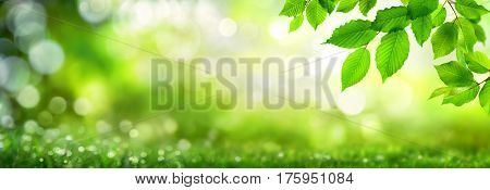 Green beech leaves on natural panoramic nature background with bokeh highlights
