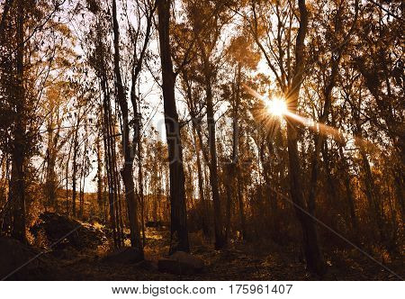 Warm autumn scenery in a forest with the sun casting beautiful rays of light through the mist and trees.