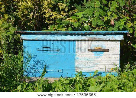 Wooden Ukrainian Blue Beehives. Natural Beekeeping in Your Backyard. Dadant bee hives.
