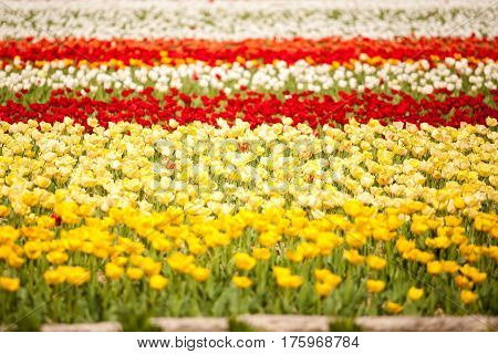 Different Flowers In Different Colors  In The Field