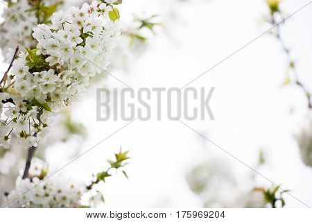 Blossoming Flowers On A Tree