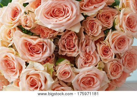 Natural background, pink roses, texture of pink roses for desktop, background. Beautiful and delicate roses