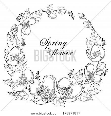 Vector round wreath with outline Jasmine flowers, bud and leaves isolated on white background. Floral elements for spring design and coloring book. Bunch of jasmine flower in contour style.