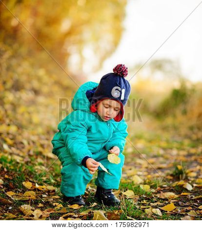 Happy Cute Boy With Autumn Leaves In The Park - Copyspace