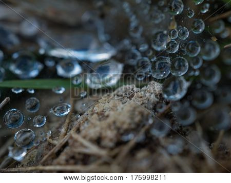 Macro spider web with morning dewdrop on cobweb and spider on the web.Selective focus