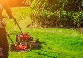 Lawn mower cutting green grass in backyard,Garden service,grass cutter cutting green lawns.Gardener mowing with lawnmower poster