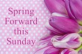 Spring Forward message A bouquet of purple tulips on pink polka dots with text Spring Forward this Sunday poster