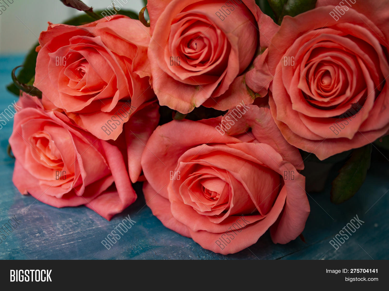 Beautiful Rose Flower Image Photo Free Trial Bigstock