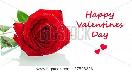 Valentine's Day. Bright Red Rose And Space For Inscription Isolated On White