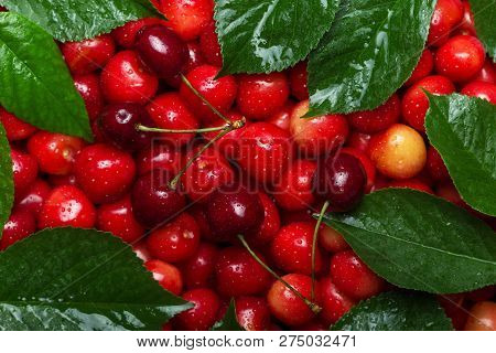 Beautiful Backdrop Of Luscious Berries Cherries With Green Leaves In Drops Of Water