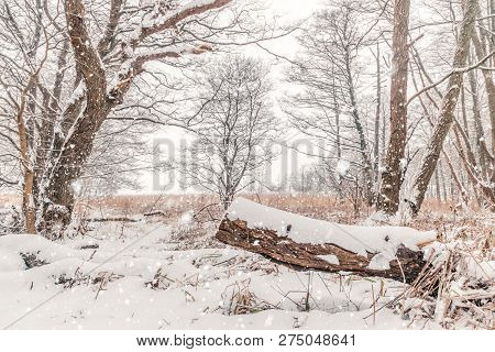 Wooden Log In A Snowy Forest With Snow Falling In The Wintertime