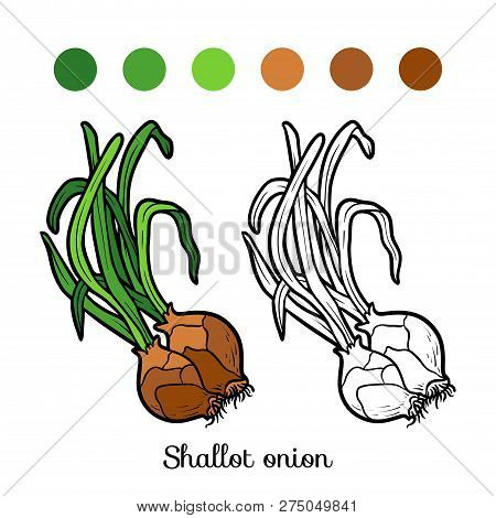 Coloring Book For Children, Vector Shallot Onion