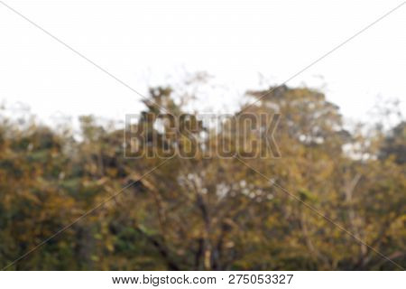 Blurred Bokeh Autumn Tree Forest Soft Brown For Background