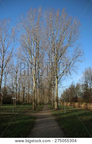 Poplar Trees Along A Pool During Autumn In The Recreation Area Named Park Hitland In Nieuwerkerk Aan