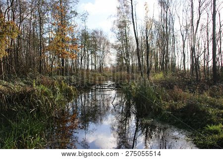Trees Along A Pool During Autumn In The Recreation Area Named Park Hitland In Nieuwerkerk Aan Den Ij
