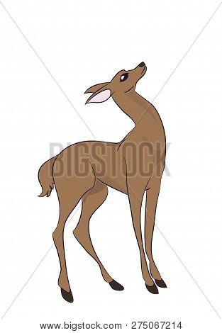 Vector Illustration Deer Female Color, Vector, White Background
